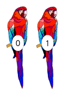 Numbered-Parrots.pdf