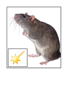 L-Mouse-Rhyming-Trail.pdf