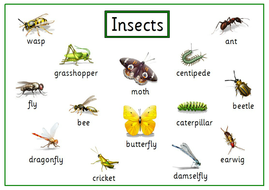 C-L-Insect-Card.pdf