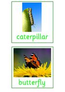 PSED-Minibeast-Cards.pdf