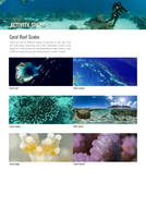 Amazing_Polyps_Reef-scales-from-coral-oceans-7-11-science-3.pdf