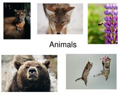 38 High Quality Photos Of Animals