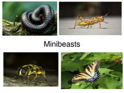 Insects-and-minibeasts.pptx