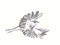 illustration: drawing of  a Free flying Bird in the open air.jpg