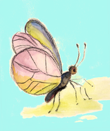 illustration: drawing of Dragonfly, resting on a leavef.jpg