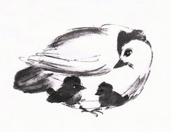 illustration: drawing of  Mother Hen and her little Chicks, in black-white.jpg