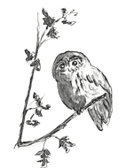 illustration: drawing of  an Owl, sitting in his tree.jpg