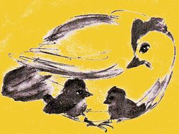 illustration: drawing of Mother Hen and her CHICKS, in yellow.jpg