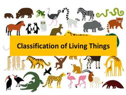 KS2 Classification of Living Things