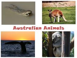 Australian-Animals.ppt