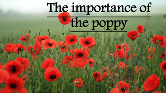 Image result for WW1 poppy