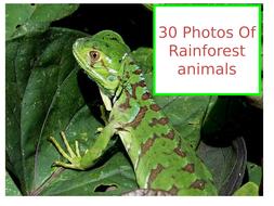 rainforest-animals.pptx