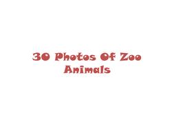30 Photos Of Zoo Animals