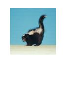65-tbtl-photograph-skunk.pdf