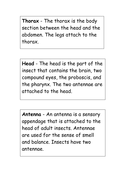 37-tbtl-insect-facts-1.pdf