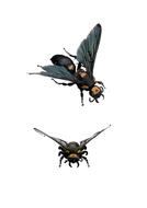70tbtl-photographs-wasps.pdf