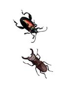 62-tbtl-photographs-beetles.pdf