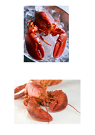 67-tbtl-photographs-lobsters.pdf