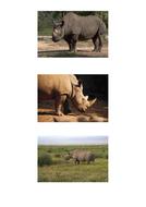 69-tbtl-photographs-rhinoceros.pdf