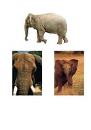 63-tbtl-photographs-elephants.pdf