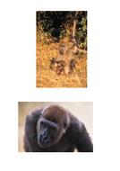 64-tbtl-photographs-gorillas.pdf
