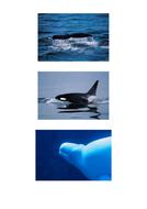 71tbtl-photographs-whales.pdf