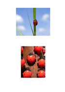 66-tbtl-photographs-ladybirds.pdf