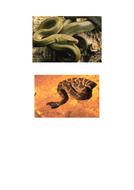 68-tbtl-photograph-snakes.pdf