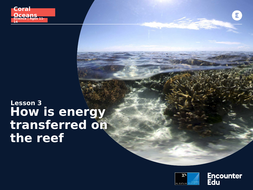 Coral-Oceans-Science-11-14-L3-Slideshow-How-is-energy-transferred-on-the-reef.pptx
