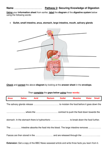 Year 8 Introduction to Digestion (Full Lesson) by
