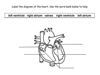 Circulatory System Printable Worksheets  Sharebrowse