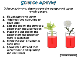 Image result for water transportation in plants year 3