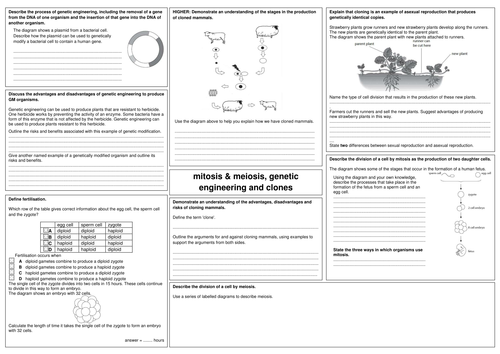 Edexcel Gcse Biology B2 Revision Sheets By Alphagekko