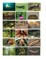 Invertebrate pictures