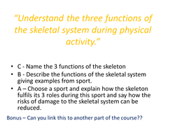 A to C Differentialted Skeletal System questions