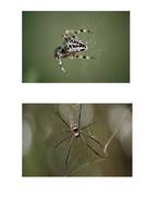 aaaarrgghh-spider-photos.pdf