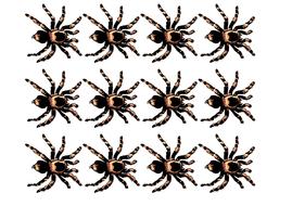 aaaarrgghh-spider-display-border.pdf