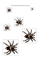aaaarrgghh-spider-size-order.pdf