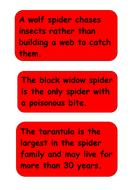 aaaarrgghh-spider-facts-spider-4.pdf