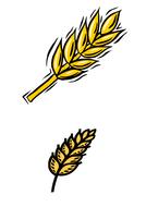 little-red-hen-ears-of-wheat.pdf