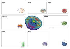Maths Times Tables Worksheet New Aqa  Gcse Science Spec Plant  Animal Cells Lesson By  Input And Output Devices Worksheet Word with Alternate Angles Worksheet Pdf Celldatacollectionsheetdocx  Pyramids And Prisms Worksheet Word