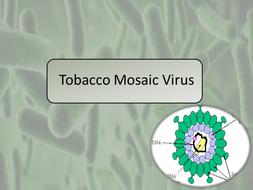 Tobacco-Mosaic-Virus.pptx