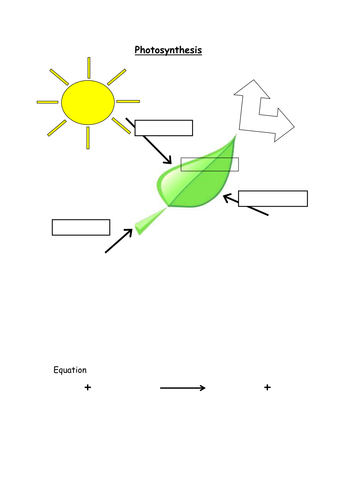 Photosynthesis, reactants, products and equation by