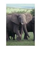 elmer-elephant-photos.pdf