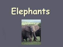 elmer-elephants-powerpoint.ppt