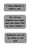 elmer-elephant-facts-4.pdf