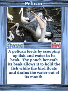 Featured Author Kathy Applebee Food Chain and Adaptations Card Game