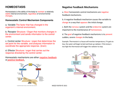 Homeostasis Worksheets and Answer Key by mizzzfoster Teaching – Worksheet Answer Keys