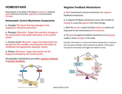 Homeostasis Bundle Power point chart worksheets answer key – Biology Worksheets Pdf