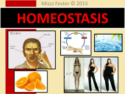 Homeostasis Bundle: Power point, chart, worksheets, answer key, quiz with answers